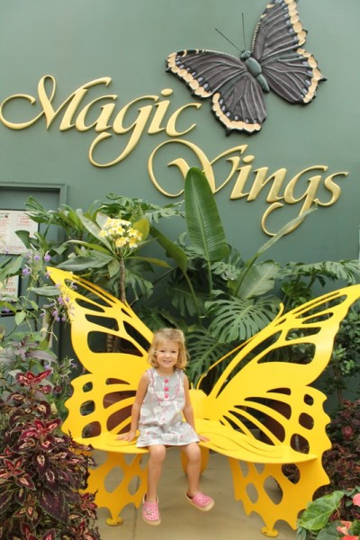 Magic Wings Conservatory_Out and About Mom_IMG_1432