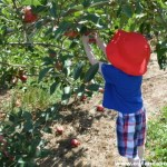Apple Picking at Rogers Orchards in Southington