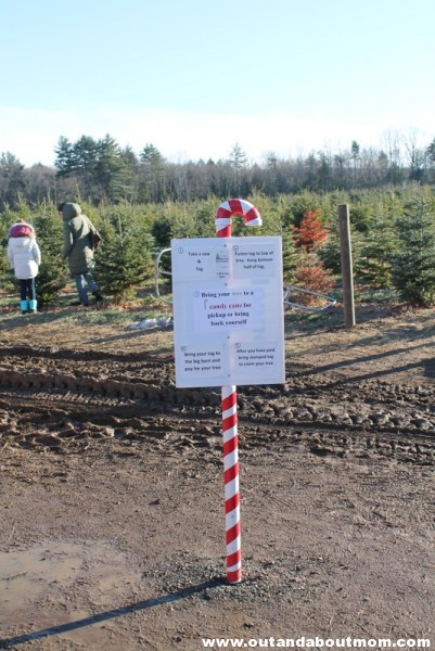 Coward's Farm_Out and About Mom_Christmas Tree (3)