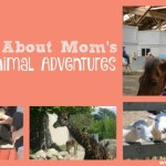 OAAM's Top Animal Adventures