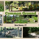 Open Farm Day at Common Ground in New Haven