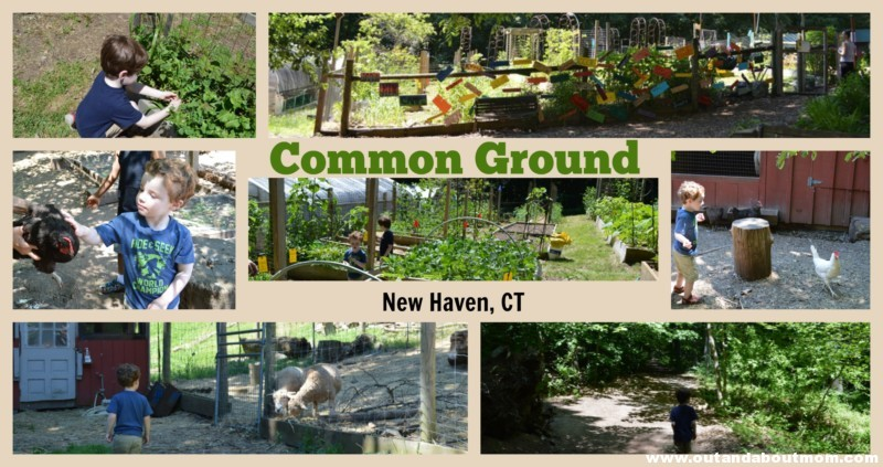Common Ground Feature Collage 2