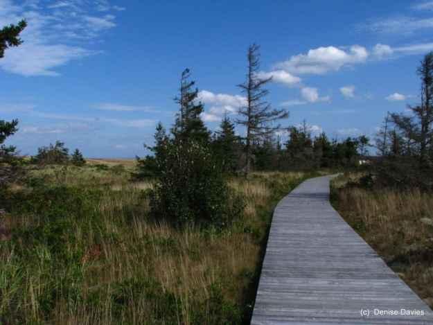 Pomquet Beach Interpretive Trail