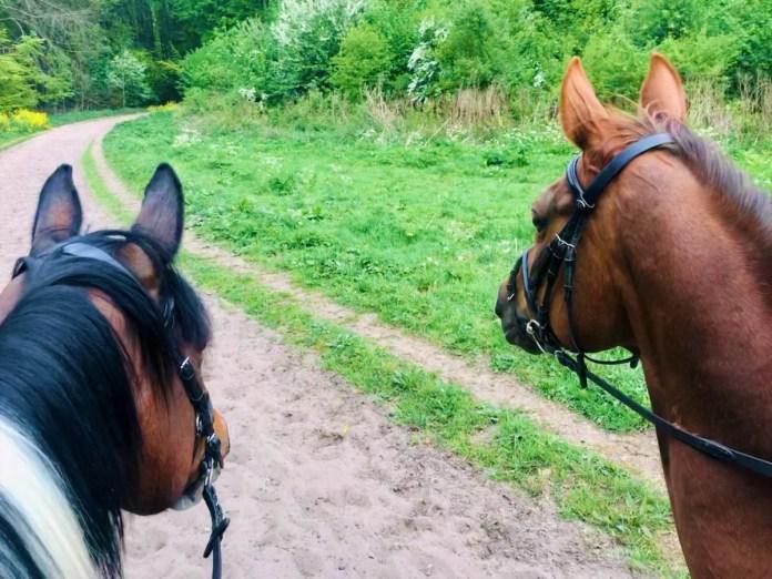 De paarden vinden het in ieder geval beregezellig om samen op pad te gaan.
