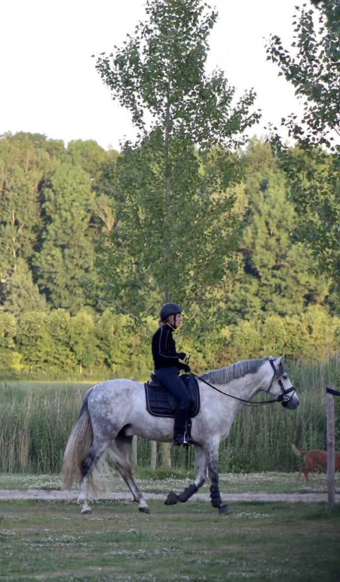 Lekker struinen met je paard door het bos.