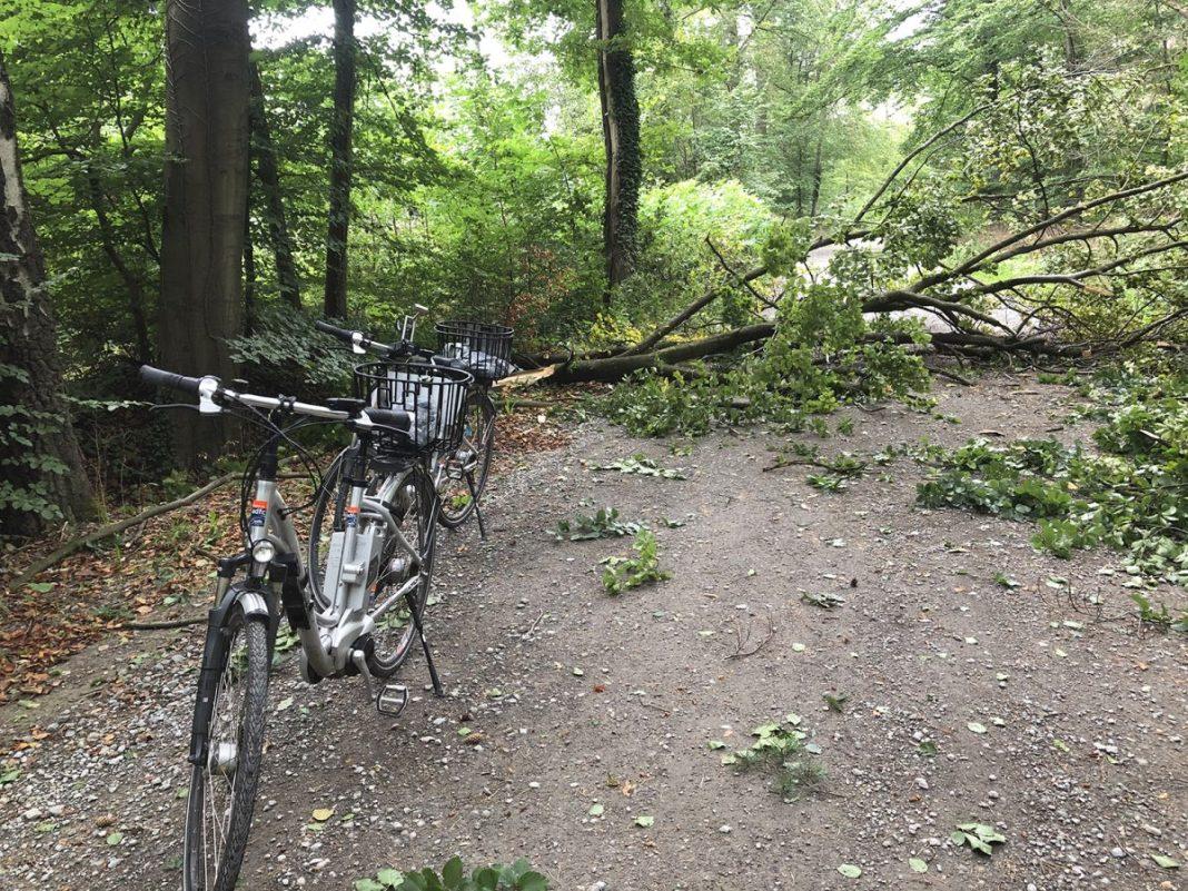 Deze boom was een obstakel op de weg