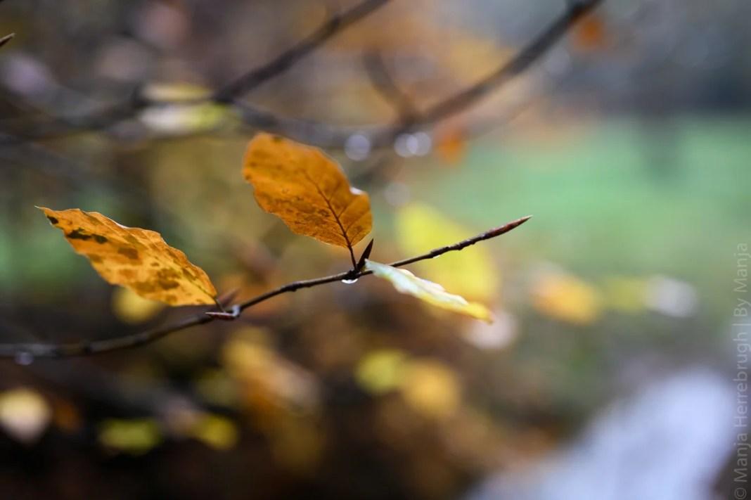 Detailfoto herfstblaadje