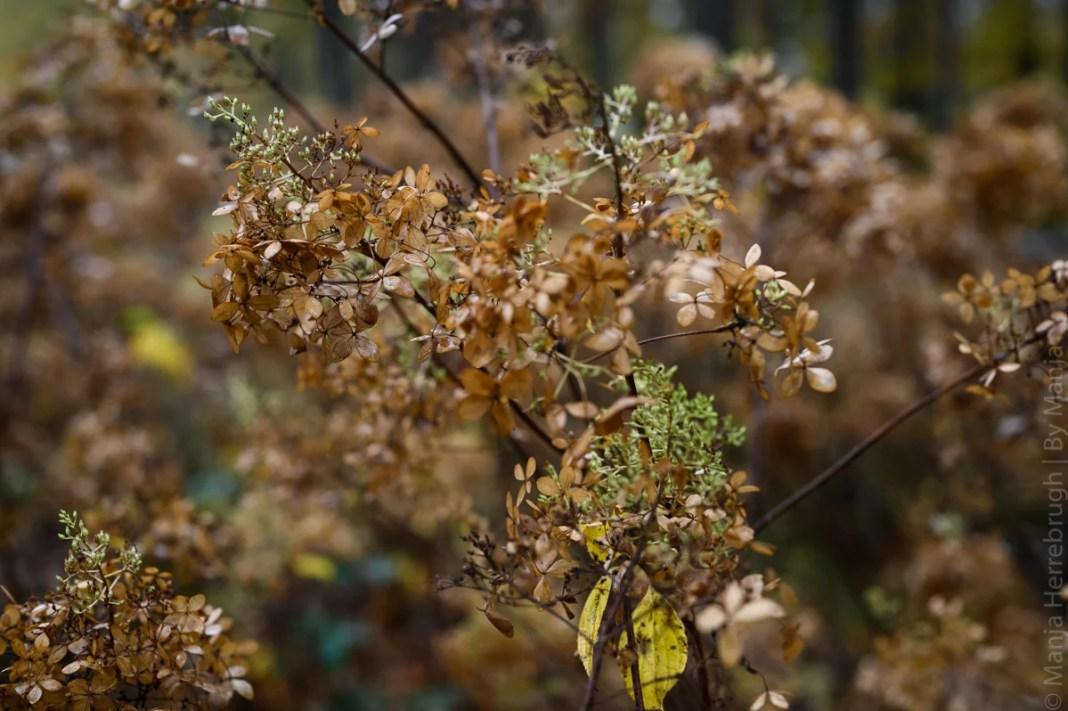 Detailfoto herfst
