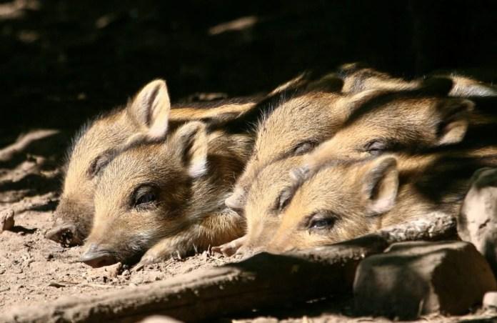 Bewoners van het Wildlife Park. Foto: CityZapper