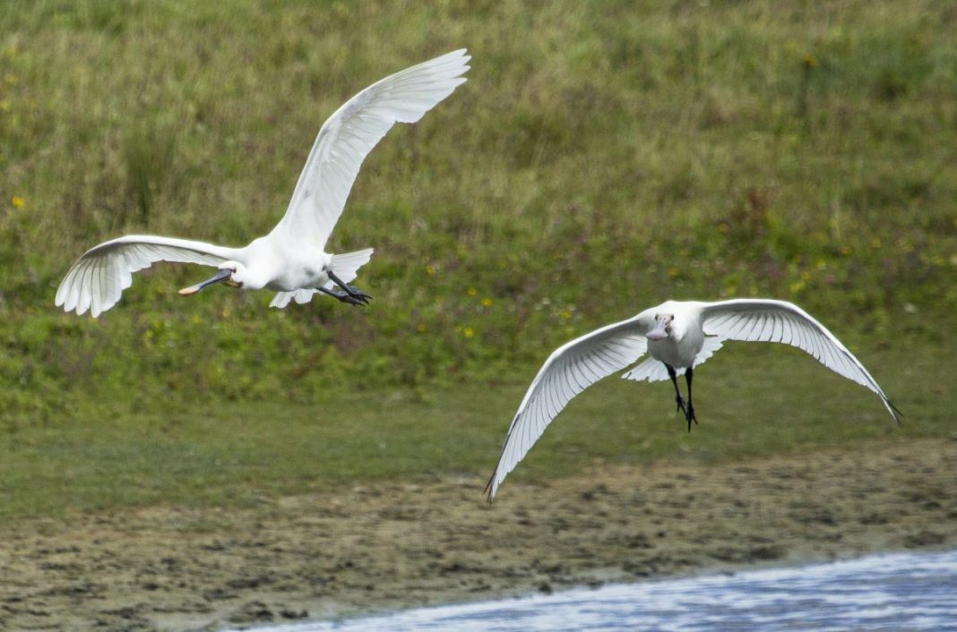 Heel veel vogels in Nationaal Park Nieuw Land. Foto: Allwrite