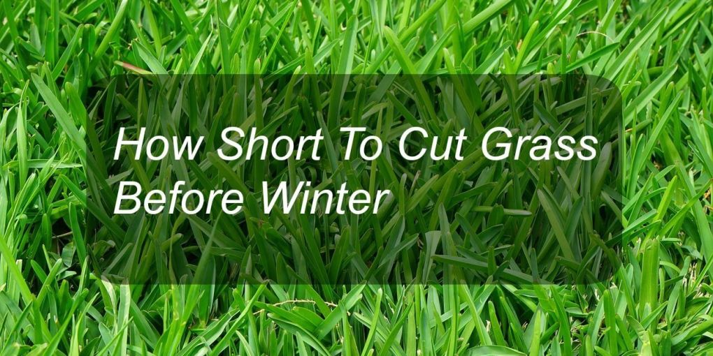 How Short To Cut Grass Before Winter