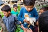 Children playing with the baby chick. Photo Courtesy Swati Chauhan/ The Outdoor Journal