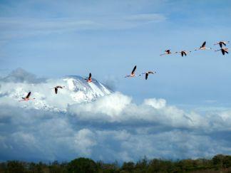 Kilimanjaro National Park natural World Heritage site in Tanzania. Photo by IUCN/Elena Osipova