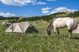 Our horses enjoyed grazing freely by the tents every evening, as the riders ate dinner and got settled at the campsites for the night.
