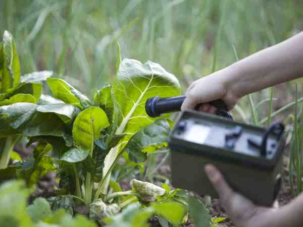 18488213 – measuring radiation levels of vegetables