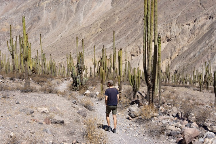 Explore the 3000m deep Cotahuasi canyon | the less touristy alternative to Colca Canyon 2
