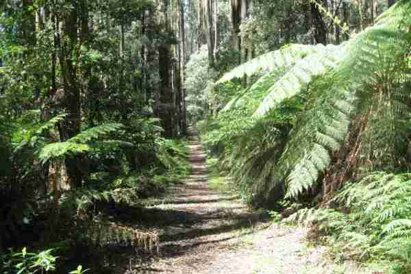 Out Doors Inc outdoors program to Toolangi Forest
