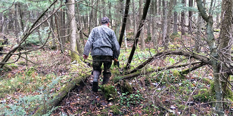 deer tracking