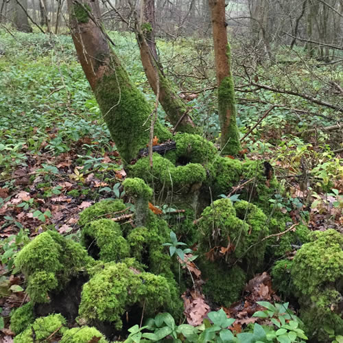 moss covering tree roots in woodland