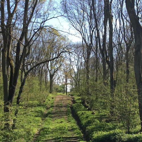 avenue of trees in woodland