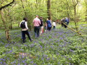 people walking through bluebells in woodland