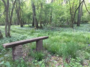 wooden bench among woodland trees
