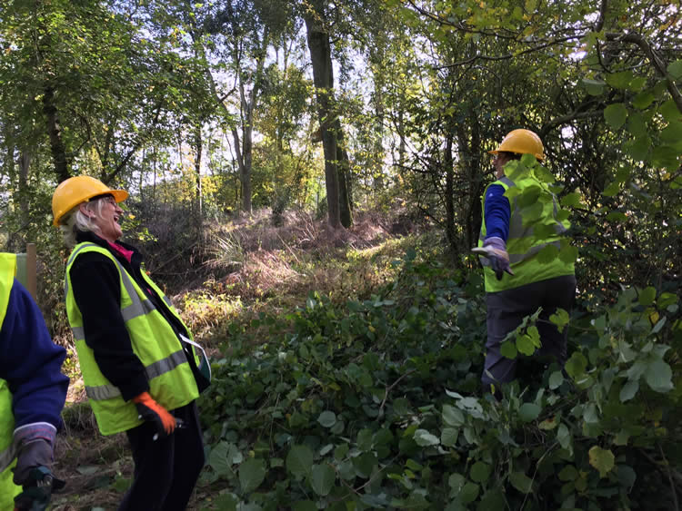 How woodlands can help promote human wellbeing