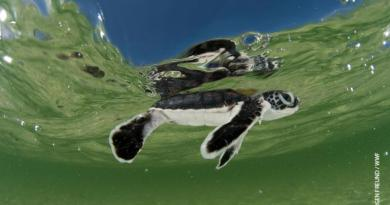 Reduce Plastic Pollution – 10 Things You Never Knew About Sea Turtles