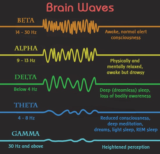 brain-waves-and-brain-states