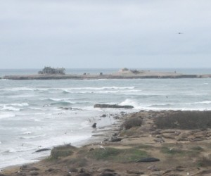 Researchers and conservationists are giving some seabirds and extreme home makeover on Año Nuevo Island (photo: Erin Loury)