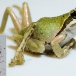 What zombie snails and teenage mutant frogs tell us about ecosystems