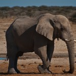 Touching Sound: Elephant rumbles inspire hope for the deaf