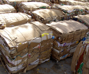 """Perhaps the greatest gift for the environment this holiday season would be a change in how we recycle paper. Photo courtesy of <a href=""""http://www.sxc.hu/photo/839897"""">SXC</a>."""