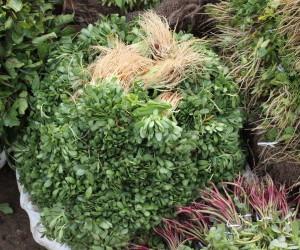LeafyVegetables02