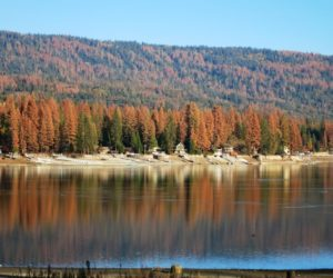Tree mortality at Bass Lake, Sierra National Forest. Source: U.S. Forest Service, Region 5