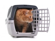 We've Got a Home Meow!