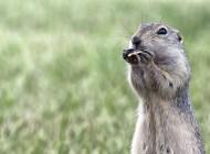 The Smart and Shady Prairie Dog