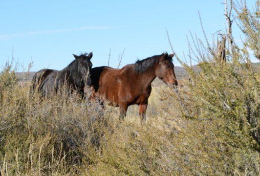 Wild Horses Long House Ruins