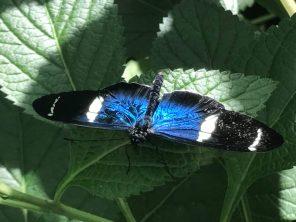Butterfly World Scottsdale