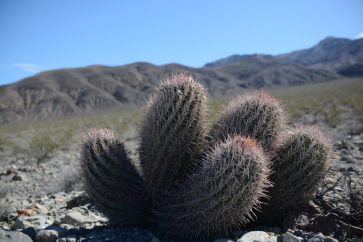 Gorgeous swirling cactus