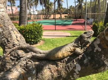 Tennis spectator at Mazatlan Mexico