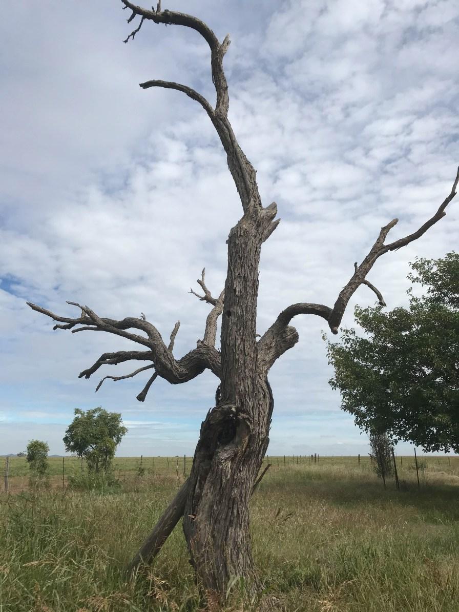 A spooky tree outside Cedar Breaks State Park