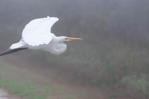 Egret changes position