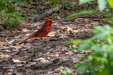 Cardinal dropped in for a visit