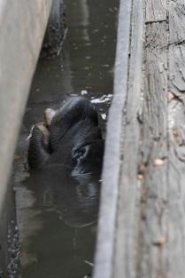 Love the joyful slurping of fresh water!