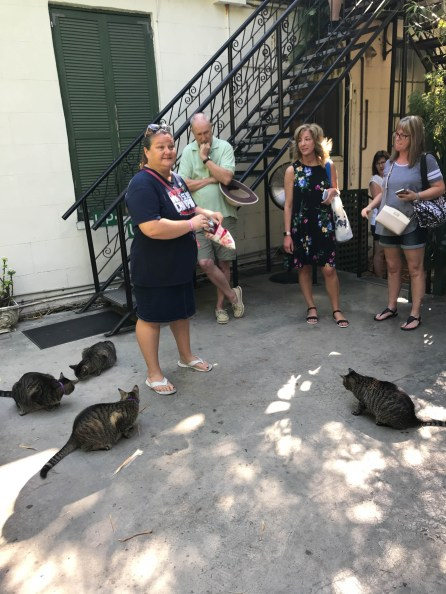 Bruce looks on as our tour guide feeds treats to some cats at Ernest Hemingway House