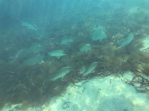 A school of fish swims by