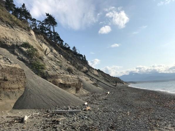 The fine sandy cliff erodes in slides