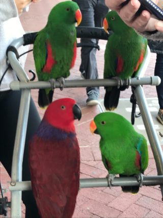 Some birds out for a walk, French Quarter, New Orleans