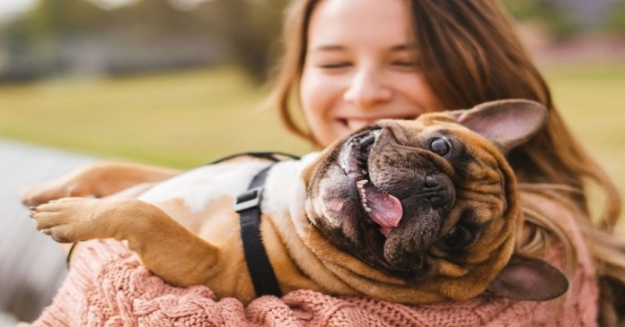 Dogs and Their Owners Share a Risk of Developing Diabetes